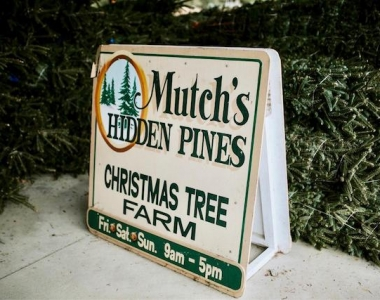 Mutch's Hidden Pines